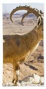 Male Nubian Ibex Capra Ibex Nubiana Beach Towel