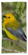 Male Prothonotary Warbler Beach Towel