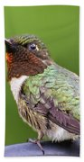 Male Ruby Throated Hummingbird Beach Towel