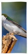 Male Violet-green Swallow Beach Towel
