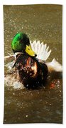 Mallard Bath Time Beach Towel