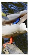 Mallard Drake Beach Towel