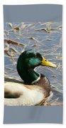 Mallard Duck Portrait Beach Towel