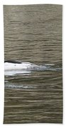 Mallard Ducks   #8479 Beach Towel