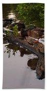 Mallard Ducks Sleeping On A Log Beach Towel