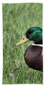 Mallard In The Grass Beach Towel