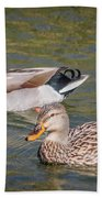 Mallard Pair Beach Towel