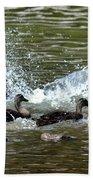 Mallard Water Party 2 Beach Towel