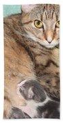 Mama Cat And Her Kittens Beach Towel