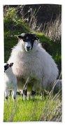 Mama Sheep And Her Two Lambs Beach Towel