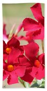 Mandevilla Named Sun Parasol Crimson Beach Towel