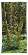Maple Glade Quinault Rain Forest Beach Towel
