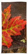 Maple Leaf On Oak Stump Beach Towel