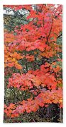 Maple Rush In The Fall Beach Towel