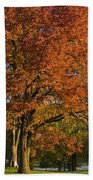 Maple Trees Beach Towel