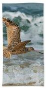 Marbled Godwit Over Surf Beach Towel