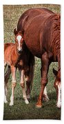 Mare With Foal Beach Towel