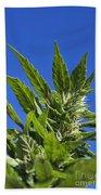Marijuana Beach Towel