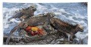 Marine Iguana Trio And Sally Lightfoot Beach Towel