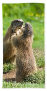 Marmots Beach Towel
