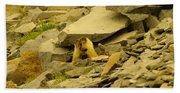 Marmots Playing Beach Sheet