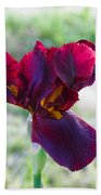 Maroon Iris Beach Towel
