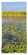 Marsh At Edge Of Lake Okeechobee Beach Towel