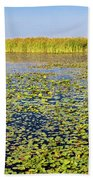 Marsh At Edge Of Lake Okeechobee Beach Sheet