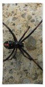 Maryland Black Widow Beach Towel
