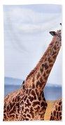 Masai Giraffe Beach Towel