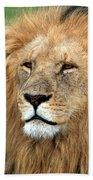 Masai Mara Lion Portrait    Beach Towel
