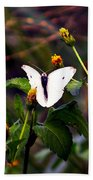 Maui Butterfly Beach Towel