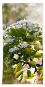 May Pear Blossoms Beach Towel