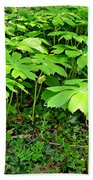 Mayapple Plants Beach Sheet