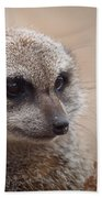 Meerkat 7 Beach Towel