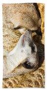 Meerkat Group Resting Beach Towel