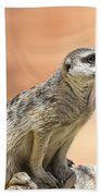 Meerkat Manor V4 Beach Towel