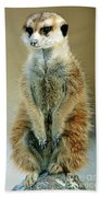 Meerkat Suricata Suricatta Beach Towel