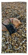 Mermaids Purse Beach Towel