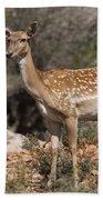 Mesopotamian Fallow Deer 2 Beach Towel