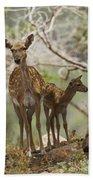Mesopotamian Fallow Deer 4 Beach Towel