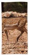 Mesopotamian Fallow Deer  Beach Towel