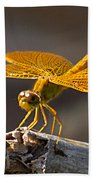Mexican Amberwing Beach Towel
