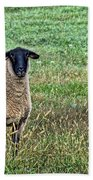 Middle Child - Blackfaced Sheep Beach Sheet