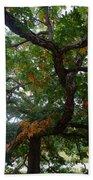 Mighty Fall Oak #2 Beach Towel