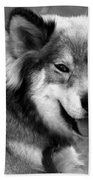 Miley The Husky With Blue And Brown Eyes - Black And White Beach Towel by Doc Braham