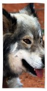 Miley The Husky With Blue And Brown Eyes Beach Towel by Doc Braham