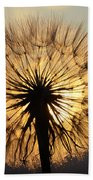 Beauty Of The Dandelion 2 Beach Towel