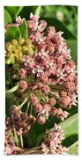 Milkweed Flowers In Bud Beach Towel