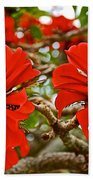 Milkwood Tree Blossoms In Donkin Reserve In Port Elizabeth-south Africa Beach Towel